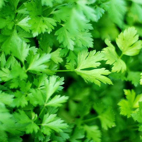 Verdeață
